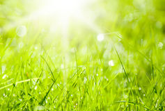 Abstract background green. Abstract background with sun and green grass Royalty Free Stock Image