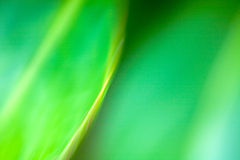 Abstract Background in Green. A cool, restful swirling green abstract background Royalty Free Stock Photos