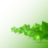 Abstract background in green color. Vector illustration for your design Royalty Free Stock Photo