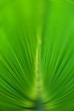 Abstract background green color of palm leaf in radial blur focus Stock Images