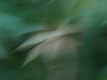 Abstract background in green colors Royalty Free Stock Photography