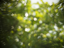Abstract background of green foliage with shaped bokeh Royalty Free Stock Photo