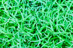 Abstract background of the green grass Royalty Free Stock Photos