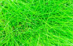 Abstract background of the green grass Stock Photography