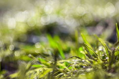 Abstract green grass Stock Images