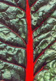 Abstract background of green leaf with red veins Royalty Free Stock Images