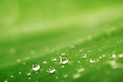 Abstract background, green leaf texture and rain drops Royalty Free Stock Photos