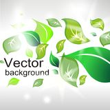 Abstract background from green leafs Royalty Free Stock Photo