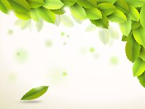 Abstract background with green leaves Royalty Free Stock Images