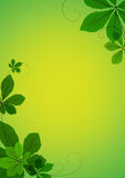 Abstract background with green leaves Stock Photo