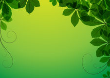 Abstract background with green leaves Royalty Free Stock Photography