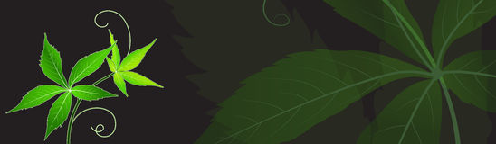 Abstract background with green leaves. Space for your text stock illustration