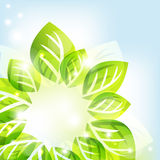 Abstract background with green leaves. Vector illustration Stock Photos