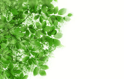 Abstract background with green leaves. On Royalty Free Stock Images