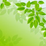 Abstract background with green leaves. Stock Images