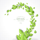 Abstract background with green leaves. Place for text vector illustration