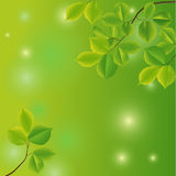 Abstract background with green leaves. Vector illustration stock illustration