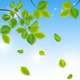 Abstract background with green leaves. Stock Image