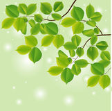 Abstract background with green leaves. Vector illustration vector illustration