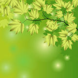 Abstract background with green leaves. Royalty Free Stock Images