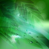 Abstract background green leaves and water drops.vector background Royalty Free Stock Photos