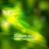 Abstract background green leaves and water drops.vector illustration Stock Photography