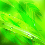 Abstract background green leaves and water drops.vector illustration Stock Images