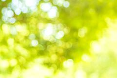 Abstract background. Green nature background with bokeh and light effect. Ecology color theme. royalty free stock photo