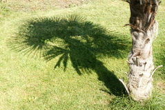 Shadow of a palm tree on a green lawn Royalty Free Stock Images