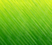 Abstract background green texture. Abstract background green lines pattern, texture, vector Stock Photography