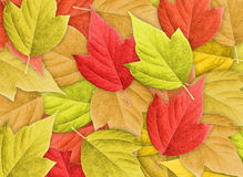 Abstract Background with Group of Autumn Leafs Stock Photography