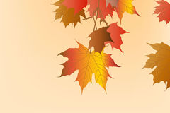 Abstract background Hello Autumn. Vector background with colorful autumn leaves Stock Images