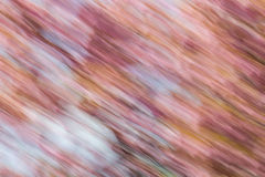 Abstract background image of cherry blossom flowers with a diagonal motion blur effect. Abstract background image of cherry blossom flowers with diagonal motion royalty free illustration