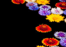Abstract background image of colorful flowers Royalty Free Stock Images
