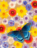 Abstract background image of colorful flowers Royalty Free Stock Photos