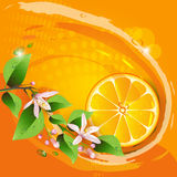 Abstract background with juicy slice. Of orange fruit and flowers stock illustration