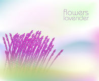 Abstract background with lavender. Abstract background with flower lavender vector illustration