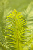 Abstract background of leaves. Bokeh blurred image Royalty Free Stock Photos