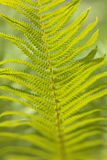 Abstract background of leaves. Bokeh blurred image Stock Photography