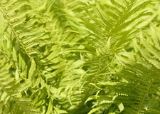 Abstract background of leaves. Bokeh blurred image Stock Images