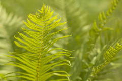 Abstract background of leaves. Bokeh blurred image Royalty Free Stock Photo