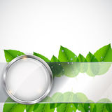Abstract background with leaves and glass frame. Vector iilustration royalty free illustration