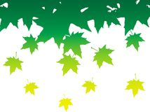 Abstract background with leaves of maple. Vector illustration Stock Image