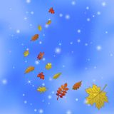 Abstract background with leaves on sky. Abstract background with autumn leaves of various plants flying in blue sky. Eps10, contains transparencies vector illustration