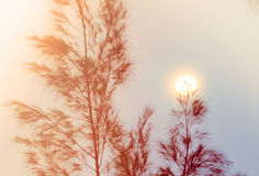 Abstract background of leaves with  the sunset on the top Stock Photos