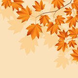 Abstract background with  leaves. Vector illustration Royalty Free Stock Images