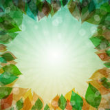 Abstract Background with Leaves. Abstract Vector Spring, Summer, Autumn, Winter Background with Leaves Stock Photography