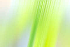 Abstract background. Abstract light green gradient background Stock Images
