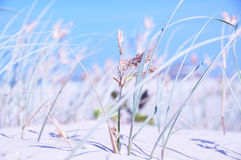 Abstract background long wild grass, blue sky, sand, ocean and surf closeup Royalty Free Stock Photo