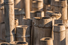 Abstract Background, a lot of bamboos. Selective Focus. Royalty Free Stock Photography